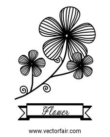 Flowers, floral card