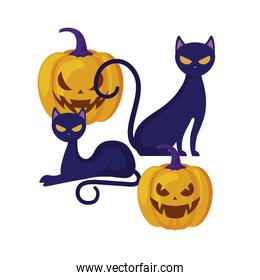 halloween pumpkins with cats isolated icon