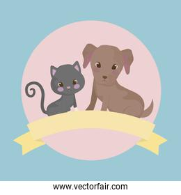 cute puppy dog with cat baby animals
