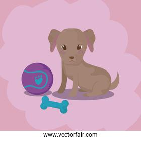 cute puppy dog baby animal with toys