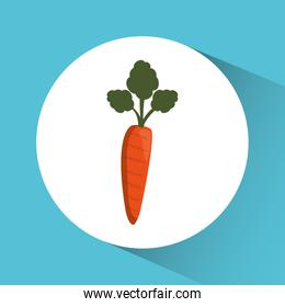 carrot icon. Nutrition and Organic food design. Vector graphic