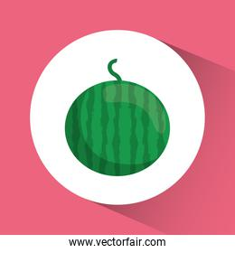 watermelon icon. Nutrition and Organic food design. Vector graph