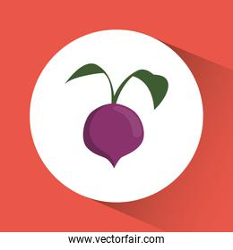 onion icon. Nutrition and Organic food design. Vector graphic