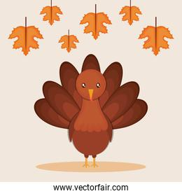 turkey animal cartoon