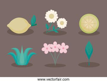 flowers and lemons icons