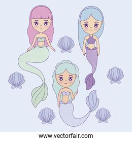 group of cute mermaids with seashell