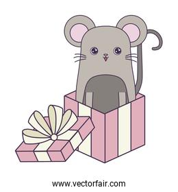 pretty mouse animal in gift box