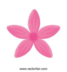flower with petals pink  vector illustration