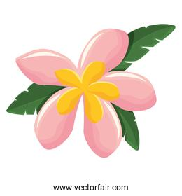 flower with petals pink and yellow   vector illustration
