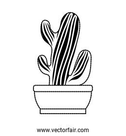 Cactus in pot draw
