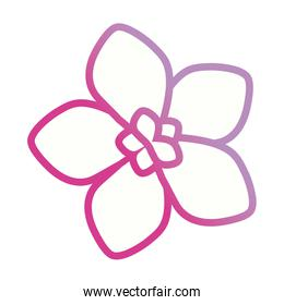 purple flower  design  vector illustration