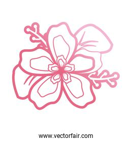 pink flower design  vector illustration