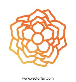 flower design  vector illustration