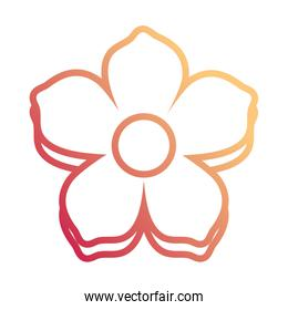 flower with five  petal design