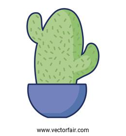 isolated potted cactus nature flora decoration