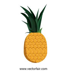tropical pineapple fruit isolated design