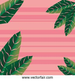 tropical palm  leaves foliage background