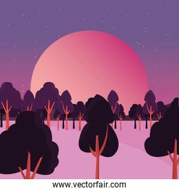 trees forest night stars night natural landscape