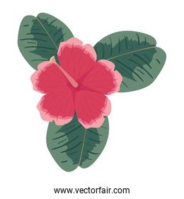flower petals leaves on white background