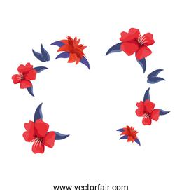 red flowers decoration on white background
