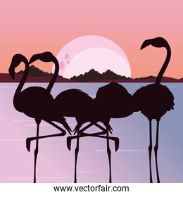 tropical flamingo in the sunset