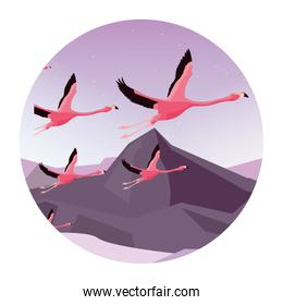 group flamingos flying in the landscape