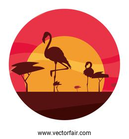 flamingos birds in the sunset
