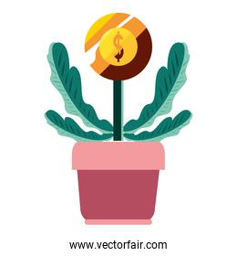 potted plant coin dollar