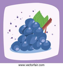 grapes fresh delicious fruit nutrition vector ilustration