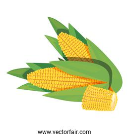 corn fresh vegetables icon vector ilustrate