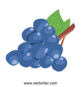 grapes fresh delicious fruit nutrition
