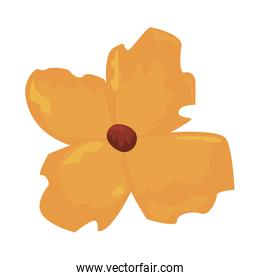 yellow exotic flower on white background