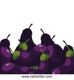 eggplants fresh vegetable white background