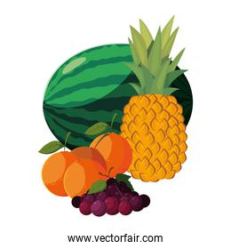 fresh fruits watermelon pineapple orange and grapes