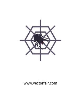 spider web with spider on white background