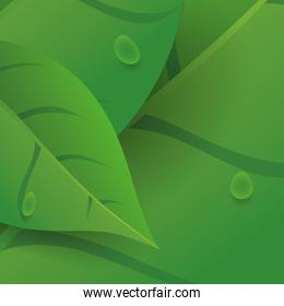Leaves nature ecology