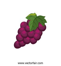 Delicious grapes fruit