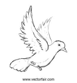 Dove the bird of peace
