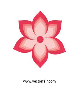 Spa flower isolated