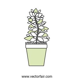 Plant in pot vector illustration graphic design