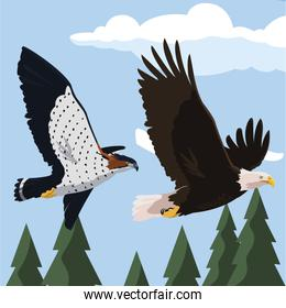 beautiful bald eagle and hawk flying in the landscape