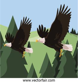 beautiful bald eagles flying in the landscape