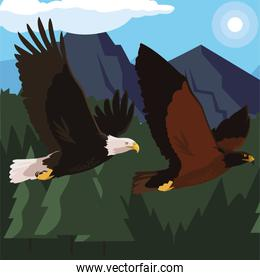 beautiful eagles flying in the landscape