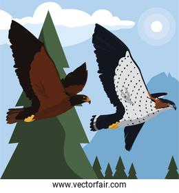 beautiful eagle and hawk flying in the landscape
