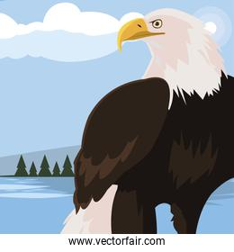 beautiful bald eagle animal in landscape