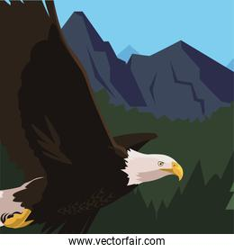 beautiful bald eagle flying in the landscape
