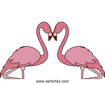 exotic pink flemish couple birds with romantic pose