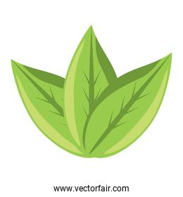 leaves icon image