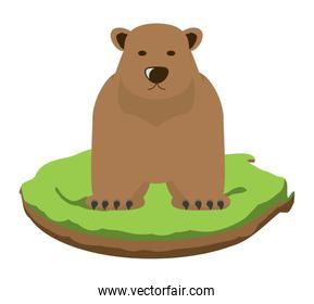 Wild grizzly bear icon