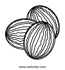 Isolated watermelons fruit vector design